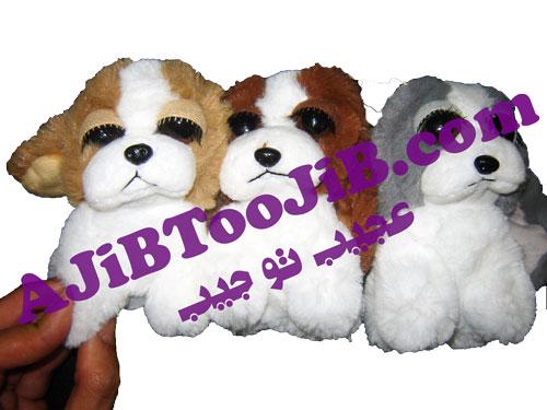 سگ های چشم جذاب
