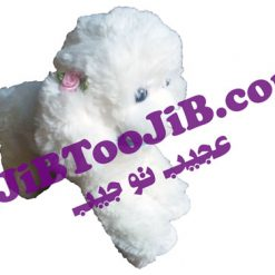 Doll cute hairy dog large