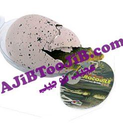 تخم بزرگ شونده دایناسور (غول پیکر)